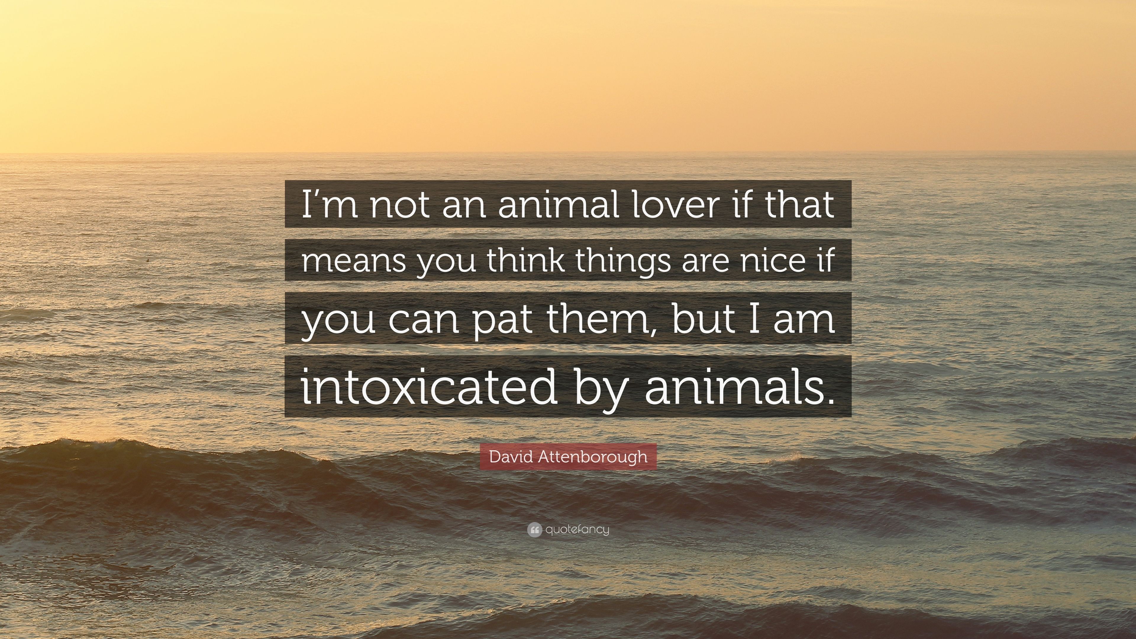 David Attenborough Quote Im Not An Animal Lover If That Means You