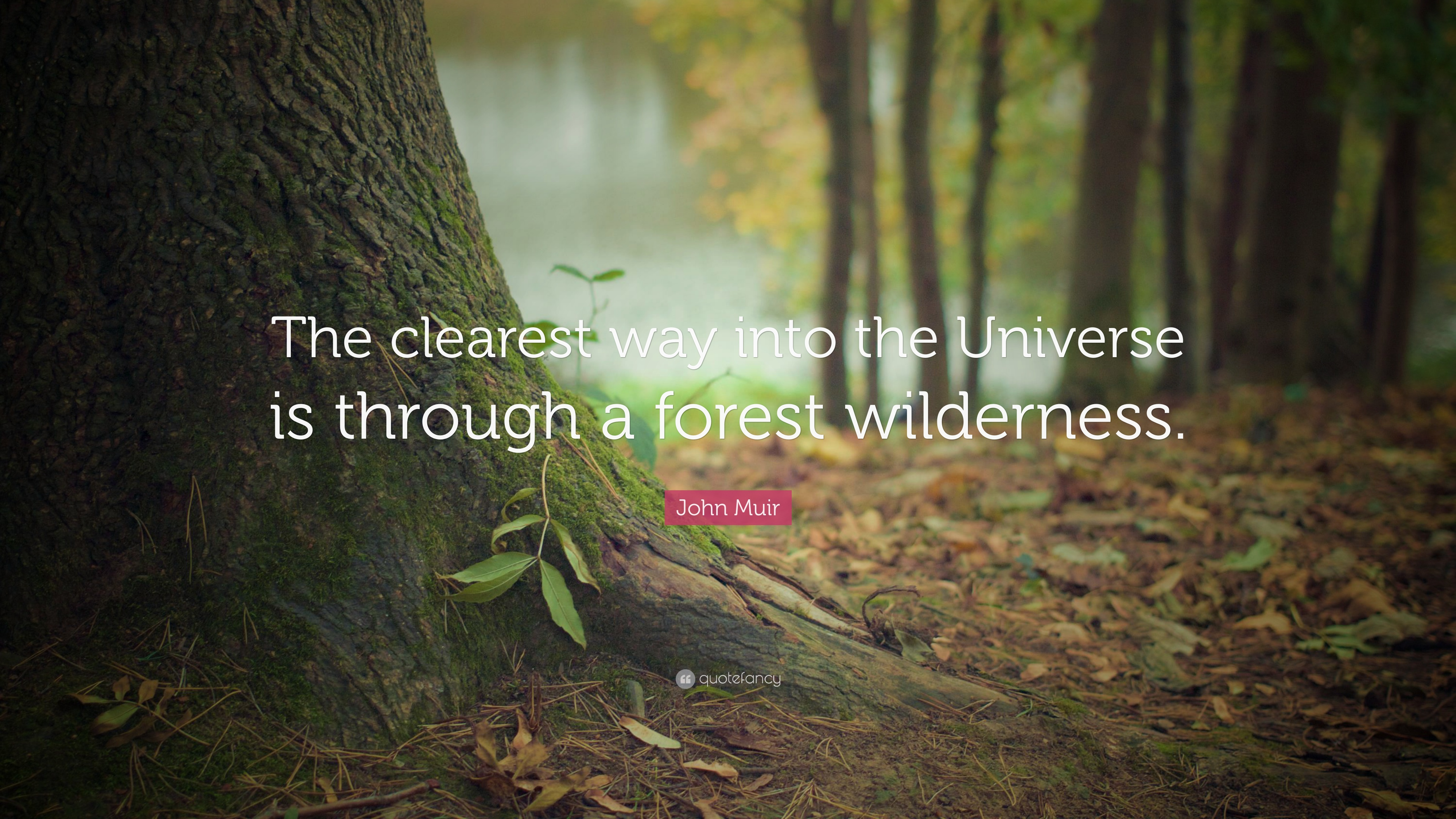 john muir quote �the clearest way into the universe is