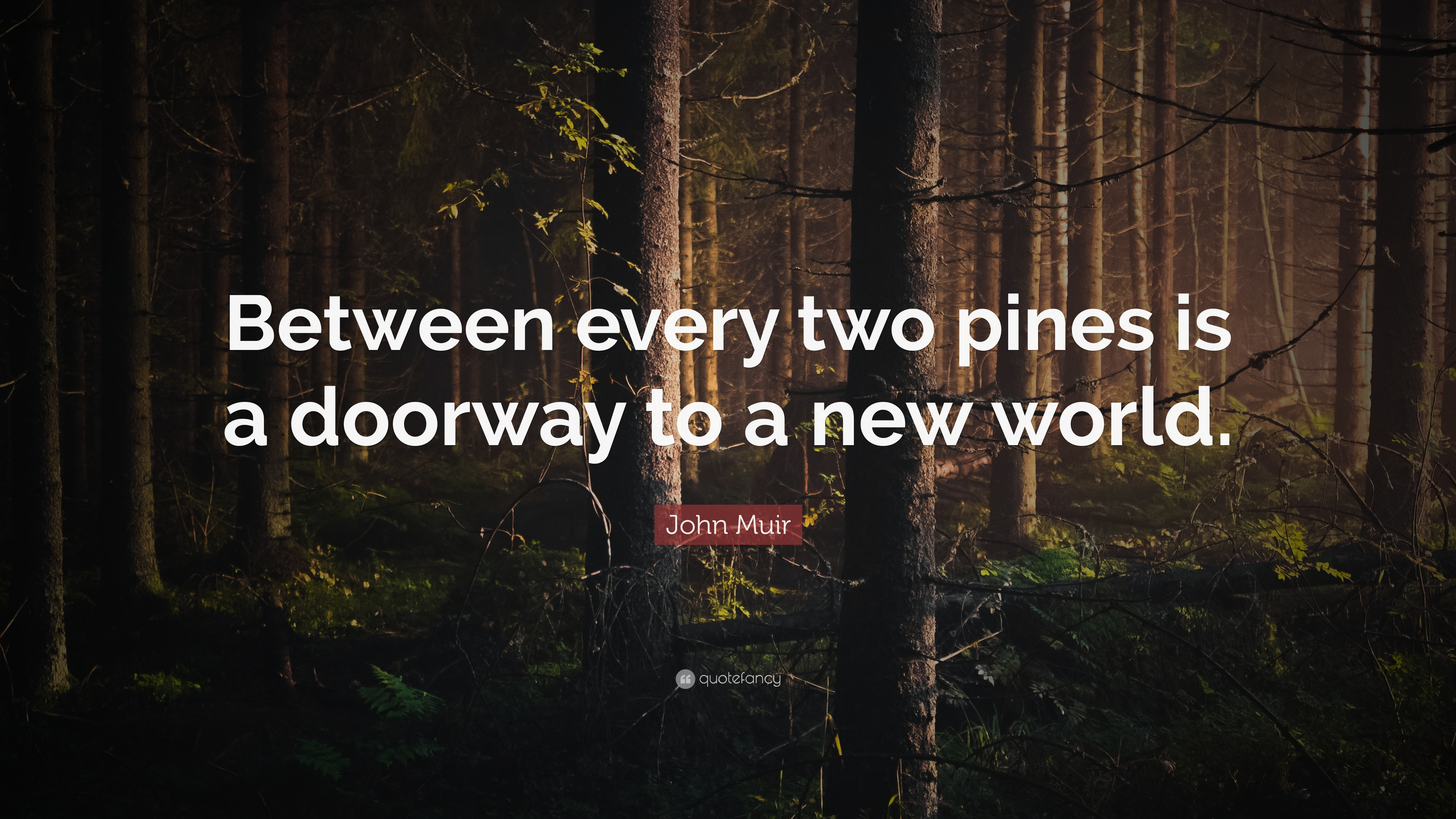 John Muir Quote Between Every Two Pines Is A Doorway To A
