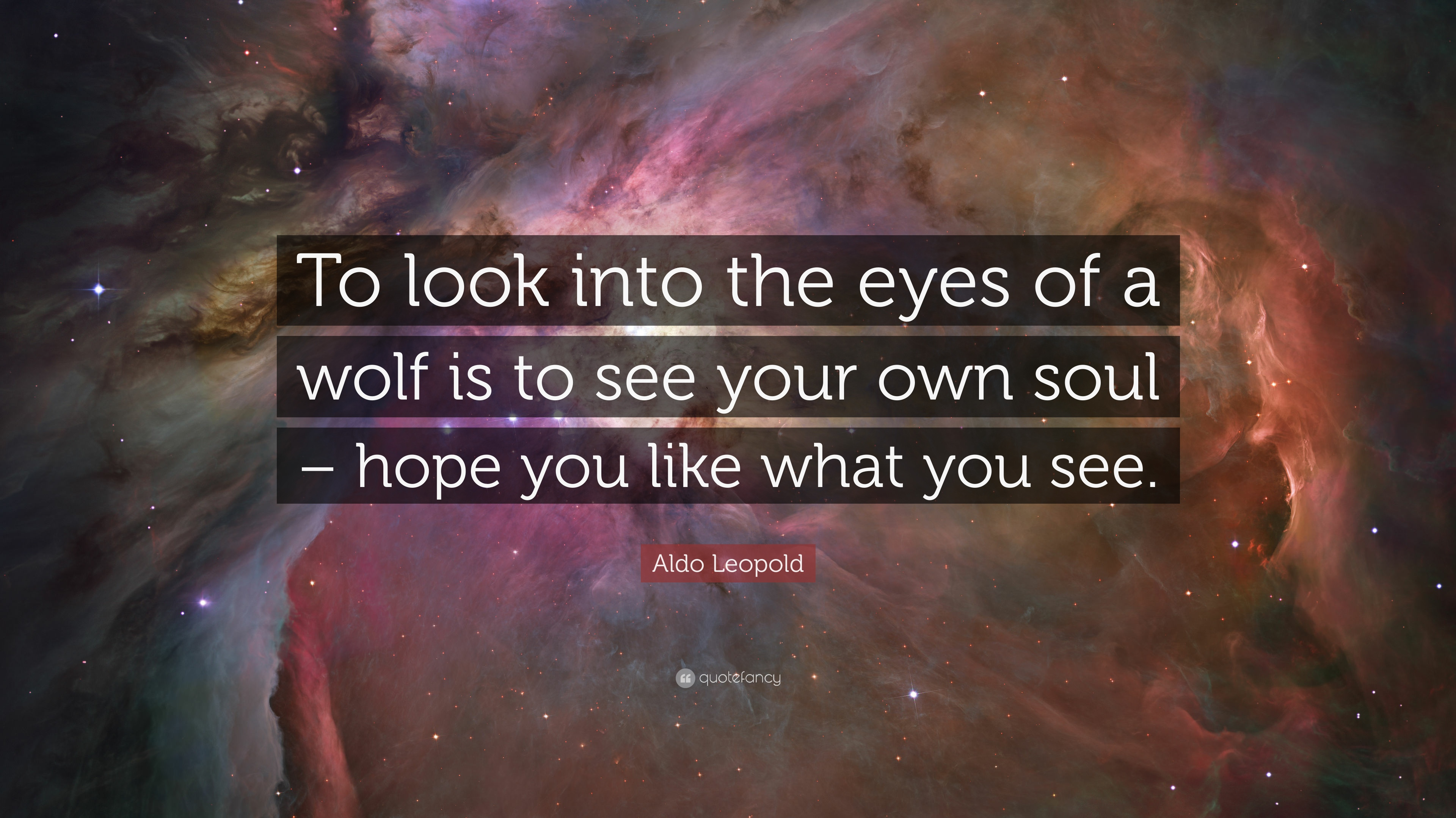 """Aldo Leopold Quote: """"To Look Into The Eyes Of A Wolf Is To"""