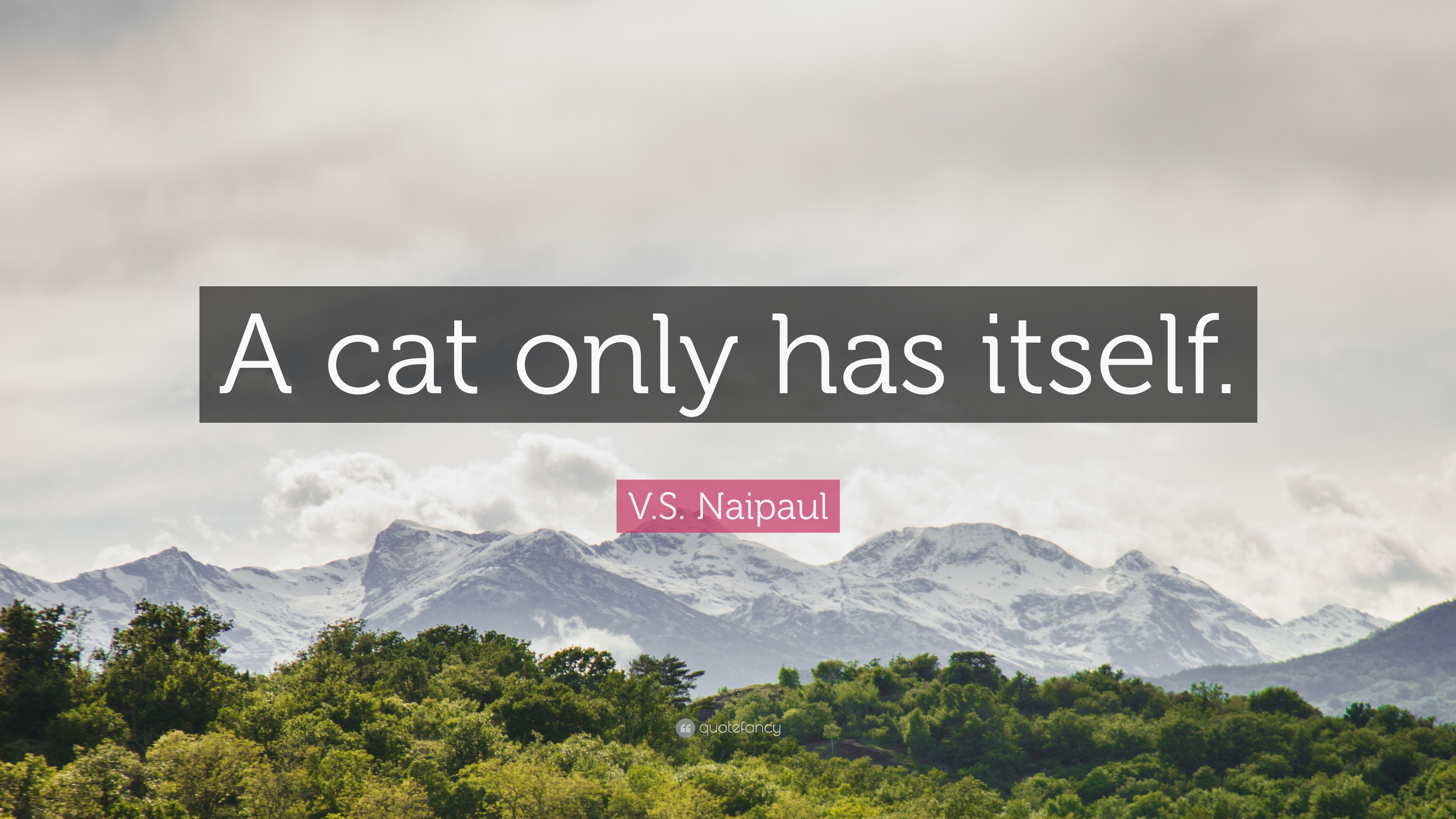 V S Naipaul Quote A Cat Only Has Itself 7 Wallpapers Quotefancy