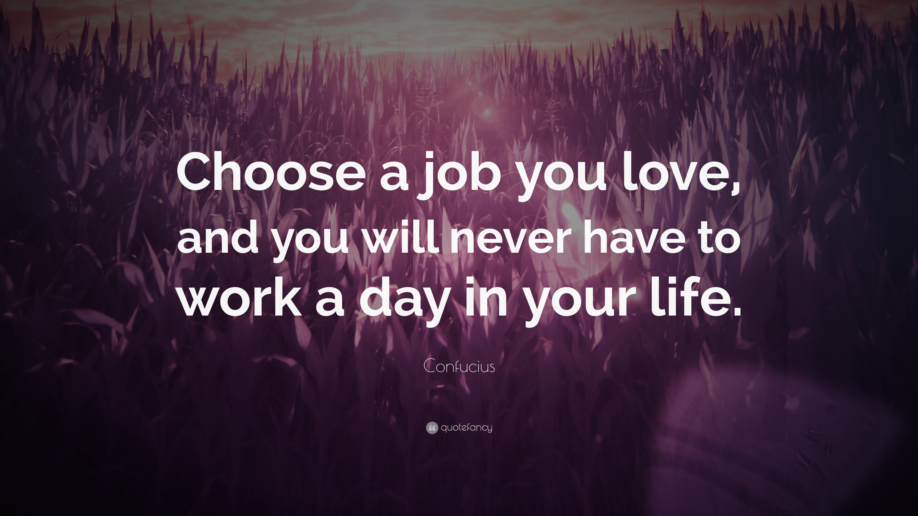 Love You and You Will Never Choose a Job