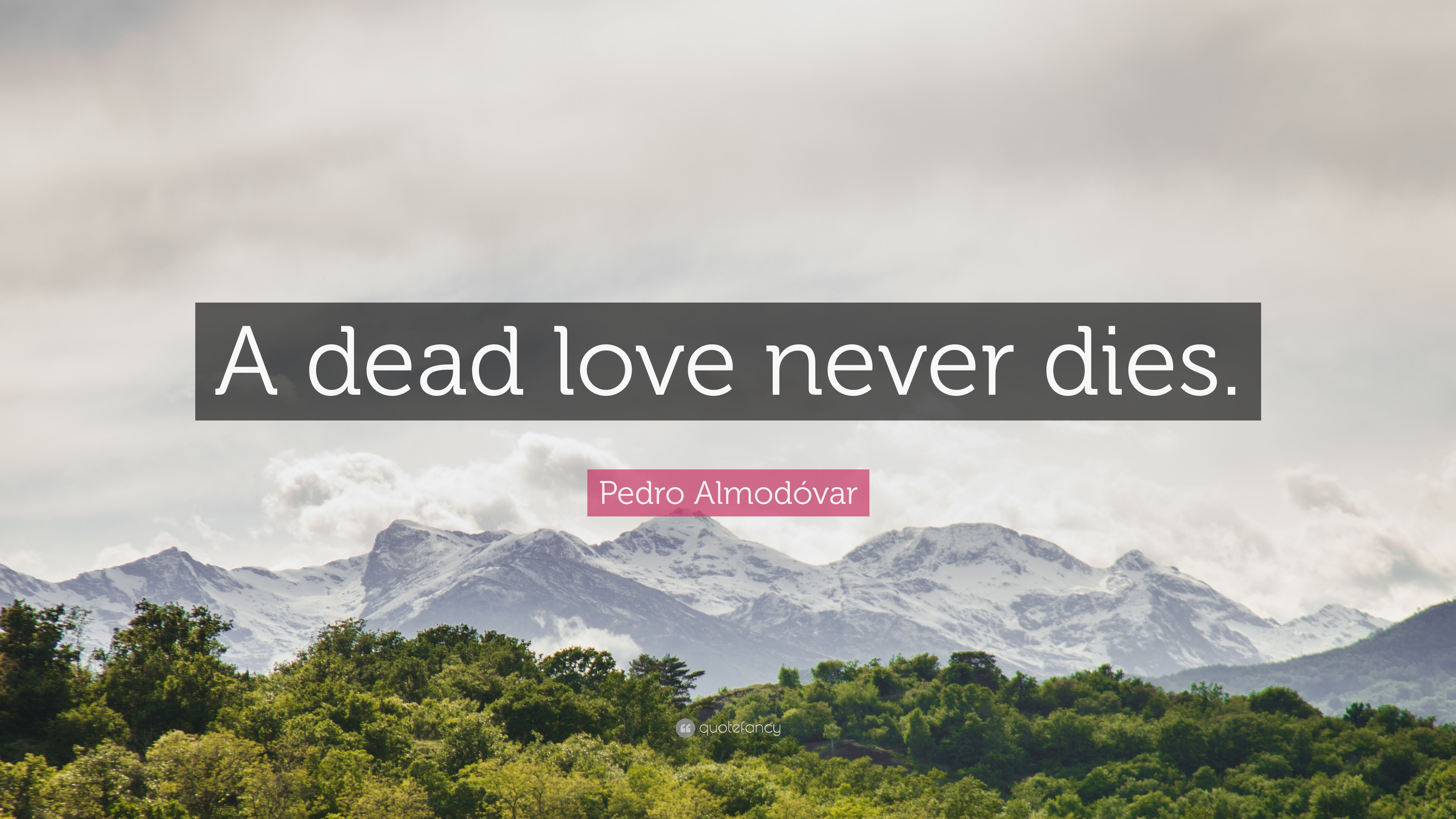 Pedro Almodóvar Quote A Dead Love Never Dies 7 Wallpapers