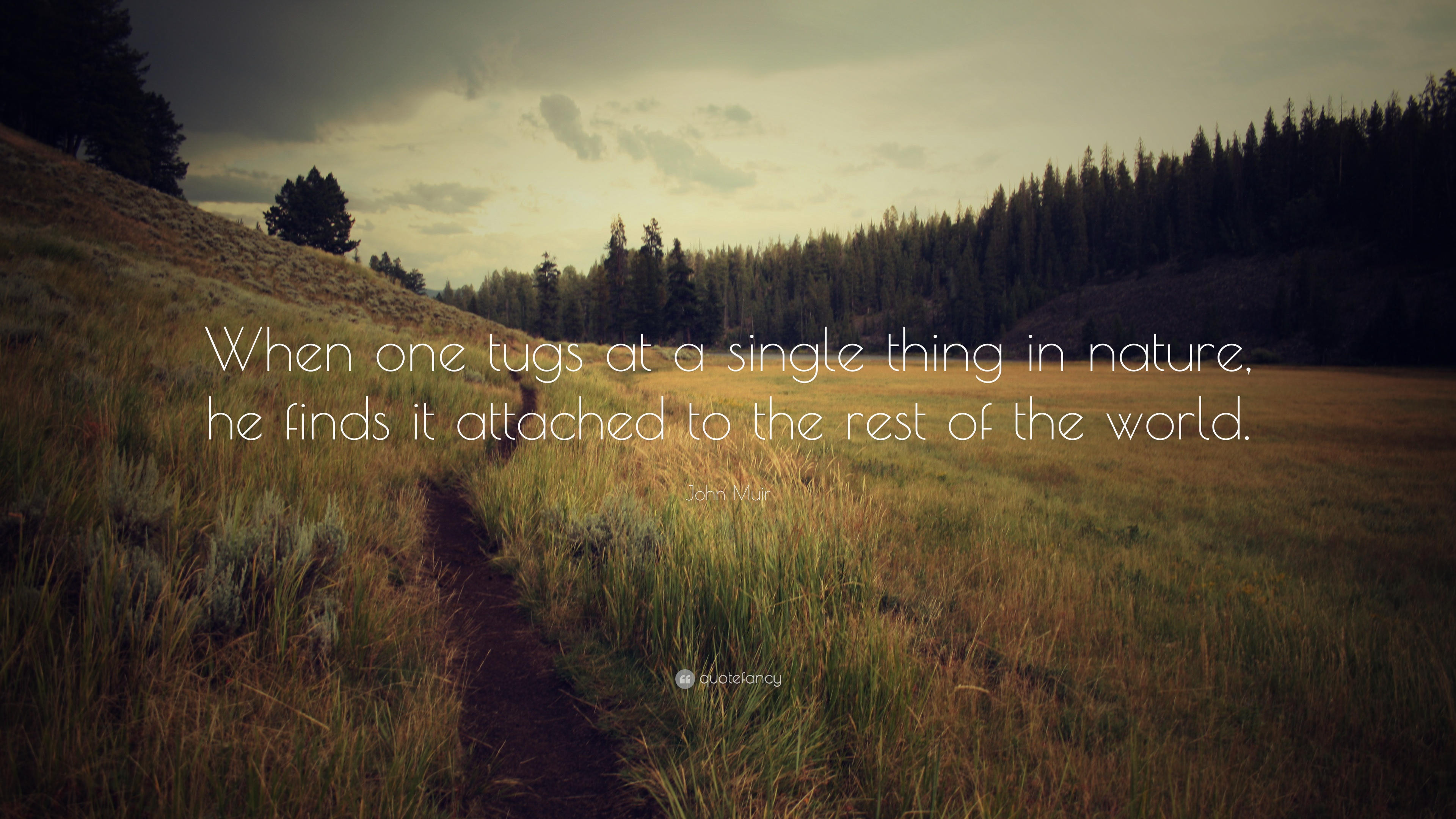 John Muir Quote When One Tugs At A Single Thing In Nature He