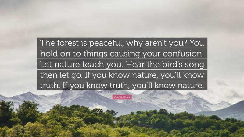 """Ajahn Chah Quote: """"The forest is peaceful, why aren't you? You hold on to things causing your confusion. Let nature teach you. Hear the bird's song then let go. If you know nature, you'll know truth. If you know truth, you'll know nature."""""""