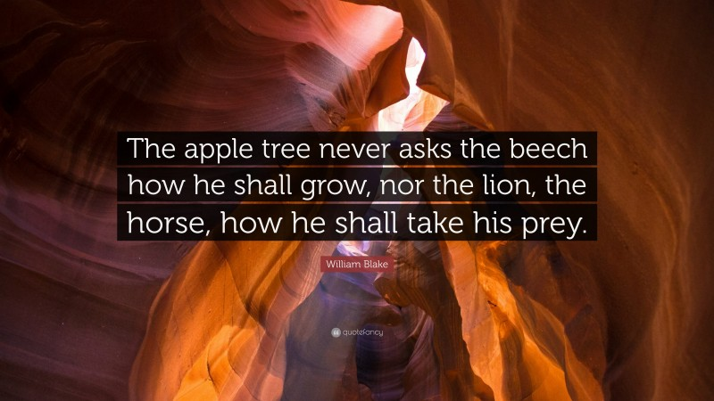 """William Blake Quote: """"The apple tree never asks the beech how he shall grow, nor the lion, the horse, how he shall take his prey."""""""