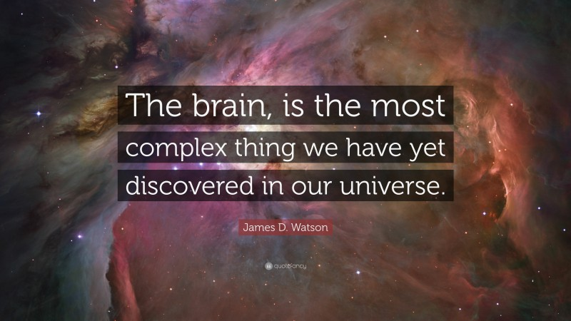 """James D. Watson Quote: """"The brain, is the most complex thing we have yet discovered in our universe."""""""