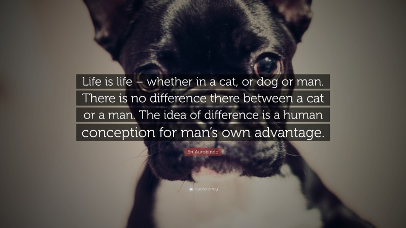 """Sri Aurobindo Quote: """"Life is life – whether in a cat, or dog or man. There is no difference there between a cat or a man. The idea of difference is a human conception for man's own advantage."""""""