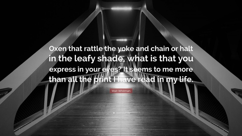 """Walt Whitman Quote: """"Oxen that rattle the yoke and chain or halt in the leafy shade, what is that you express in your eyes? It seems to me more than all the print I have read in my life."""""""